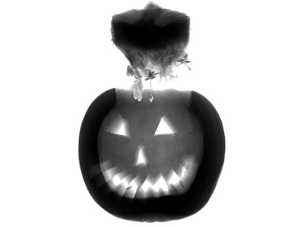 Uh-oh. This Pumpkin completely lost its head! Thanks to our friends at Creative Electron for popping Pumpkin into their spooktacular X-ray machine and sharing the results with us.