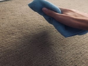 How to Get Rid of Urine Stains in the Carpet