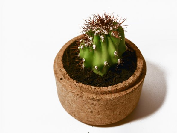 Alternatively, you can take the broken cactus piece to plant a new cactus!