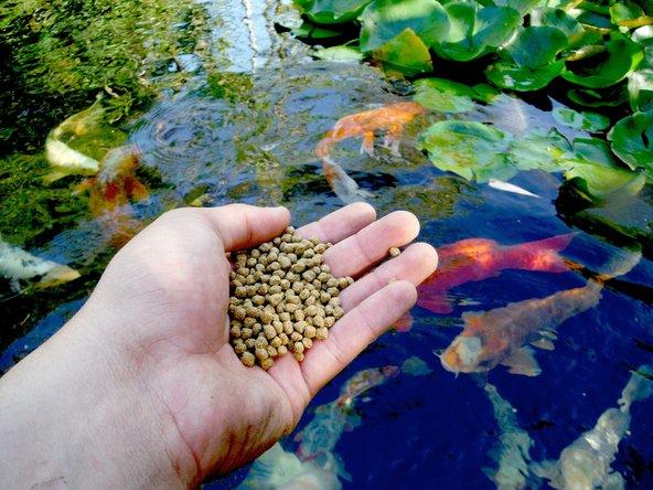 Feeding a fish Main Image