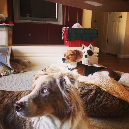 Three dogs that clog up vacuums with their pet hair