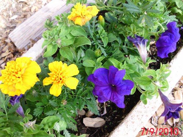 Power Flower Garden Flowers Replacement